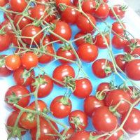 マイクロトマトを買う