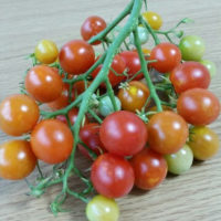 房成りトマト