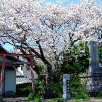 回想~2017桜景色