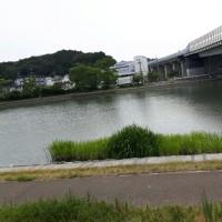 小野なな nanaono. NANAONO    ミニビワ   夏の琵琶湖大変です。