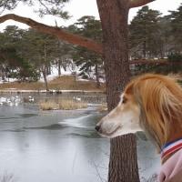氷点下散歩と羊さん