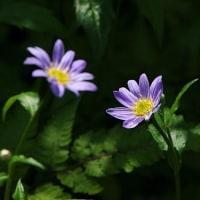 和を思わせる花3つ