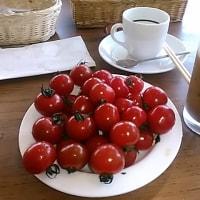 本日のランチはコスパ最高のフォルクス針中野店へ。先日テレビで健康に良いと紹介されていたプチトマトをどっさり。ランチドリンクは103円でコーヒー4杯。ホット1杯・アイス3杯。