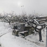 りんご山の冬支度・・・の巻
