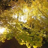 晩秋の公園にて