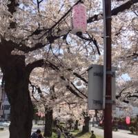 ひらのや[飯田市] と 大宮通り桜並木