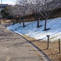 打上川治水緑地の雪