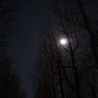 極寒の夜に撮影しました。