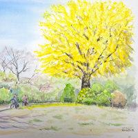 秋が進んでいた雨上がりの昭和記念公園でスケッチです