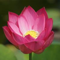 24日の京都府立植物園から ( 夏だより )