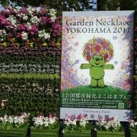 「みなとガーデン」/横浜公園(2017春)