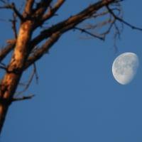 朝の空に浮かぶ白い月が存在感を示していました