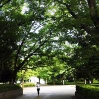 新緑の公園を歩いて