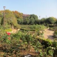 久々の柏の葉公園