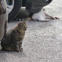 2月22日は「猫の日」