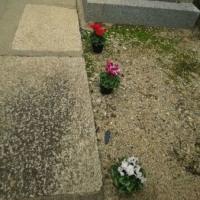 『豊子忌』   藤次寺の山﨑豊子の墓所を期間限定で公開