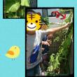 きゅうりの収穫🌱