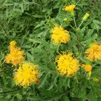 我が家の四季の花 10月 黄色い花