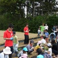 大崎生涯学習センター主催「親子でいっしょに農業体験」が開催されました