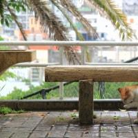 梅雨真っ最中の沖縄の猫たち 2016年5月 その1