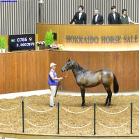 【サマーセール2016(Summer Sale、第3日目、8月24日)】~結果レポート(最高額馬はスペシャルウィーク産駒)