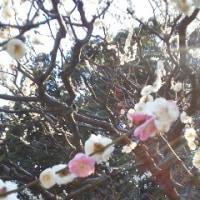 春一番 170217
