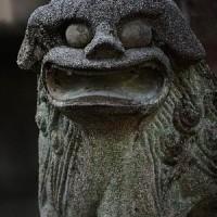 今日お参りした神社の狛犬は3対