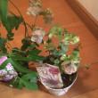 木曜日は花屋の日