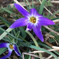もう春がやって来ていました!