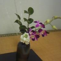 高校茶道部:  本日のお花