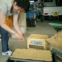 黒豆作りに挑戦!(種まきから発芽まで)
