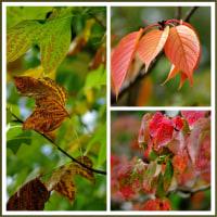 秋に触れる