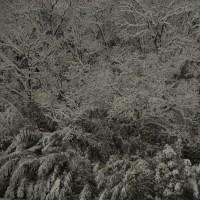 またまた大雪です。