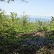 鏡台山にも行ってみる・・・◆山頂で ふわふわと舞うもの