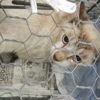 飼い主の居ない野良猫さん保護しました 2匹