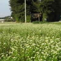新富町日置のそばの花