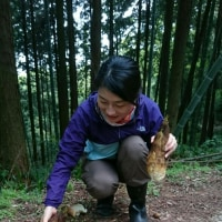 タケノコ掘り。