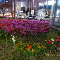 【明洞でお夜食タイム♪】伝統寺院巡礼ファムツアー⑱2017/4/21