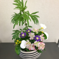 ハンカチの花