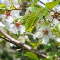春のお花とのコラボ~♪
