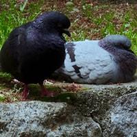 aves 508