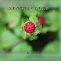 『 生来の愚鈍そのまま蛇苺 』物真似575夏qt2305