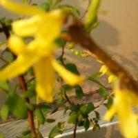 街角の花達