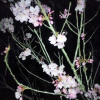 日本象徴する花こそ桜だと思う。