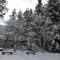 雪道を往く  麺や一心@野村