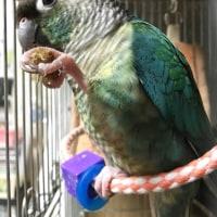 鳥さんと同じものを食べたい・・・