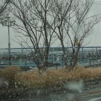 雪が舞った