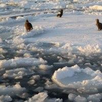 流氷原の日の出(根室海峡)
