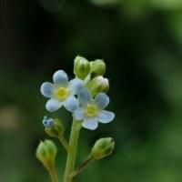 小さな花でも。