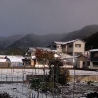 今朝はかみさんが「真っ白や!」と叫んだくらいに雪が積もっていました